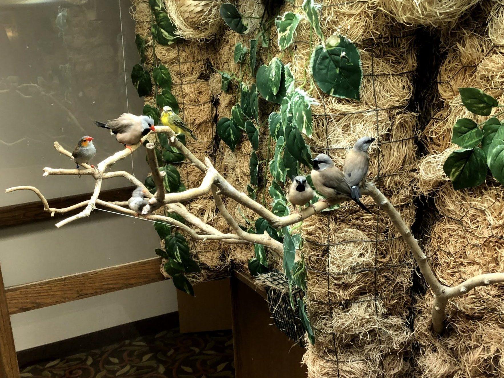 Margaret Place bird cage